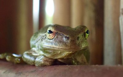 Feeling stuck? Try the Kundalini Yoga Frog Pose