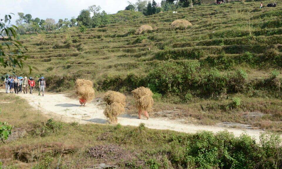 Rice Paddies Nepal